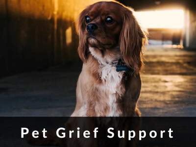pet loss grief support