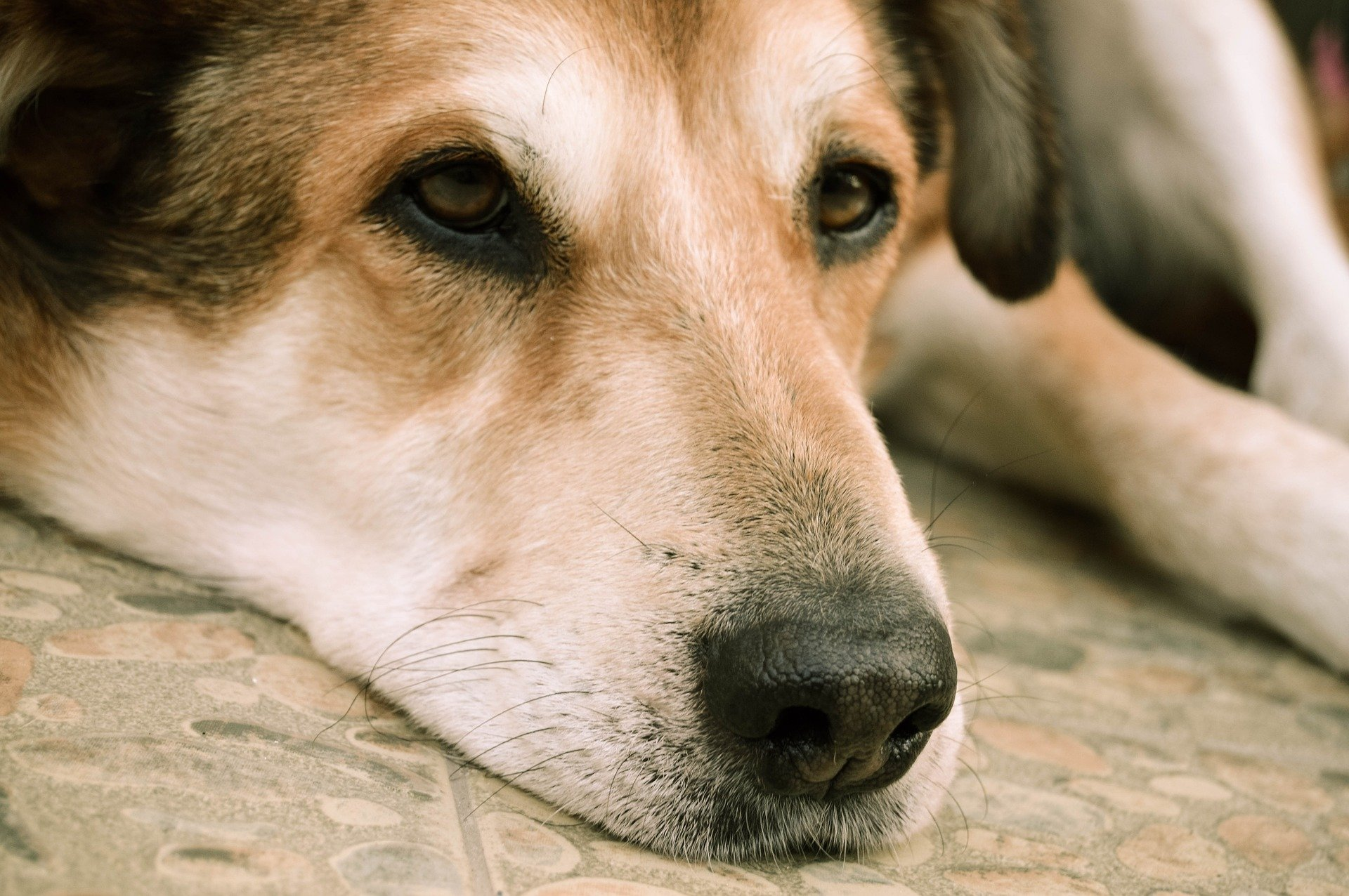 Helping Your Pet Understand the Loss of their Companion