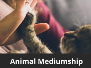 Animal Mediumship