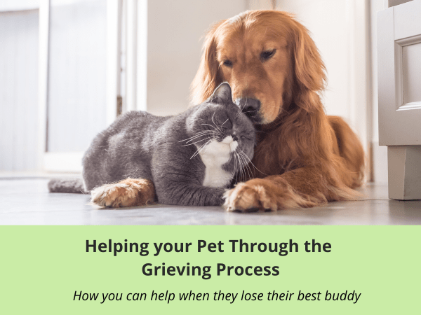 Workbook for helping your pet through the grieving process
