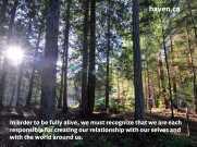 onlineslide-words-forest-sunlight