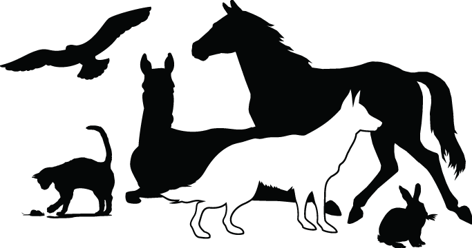 Center Valley Animal Rescue
