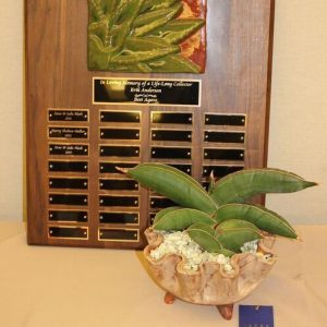 best-agave-2014