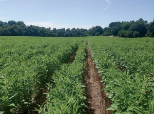 Arkansas Row Crops