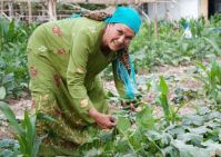 Blogs.WorldBank.org: Secrets to successful irrigation management from Central Asia