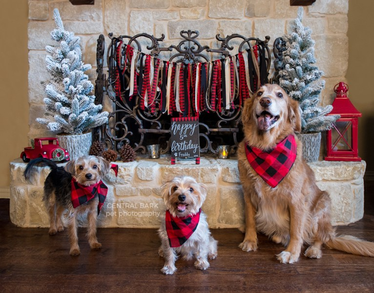 Three dogs wearing red and black bandanas sitting in front of fireplace
