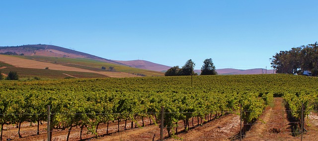 Try out wines from smaller vineyards like Saddlerock and Semler with a Laithwaite's Promo Code