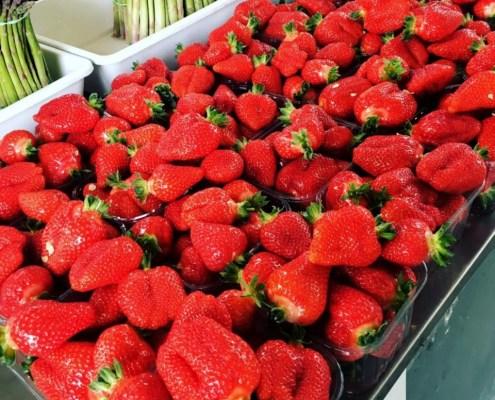 Azienda Agricola Andrea Manzini. Frutta e verdura della Valsamoggia