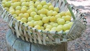 Melon Basket: Debbie Tremel