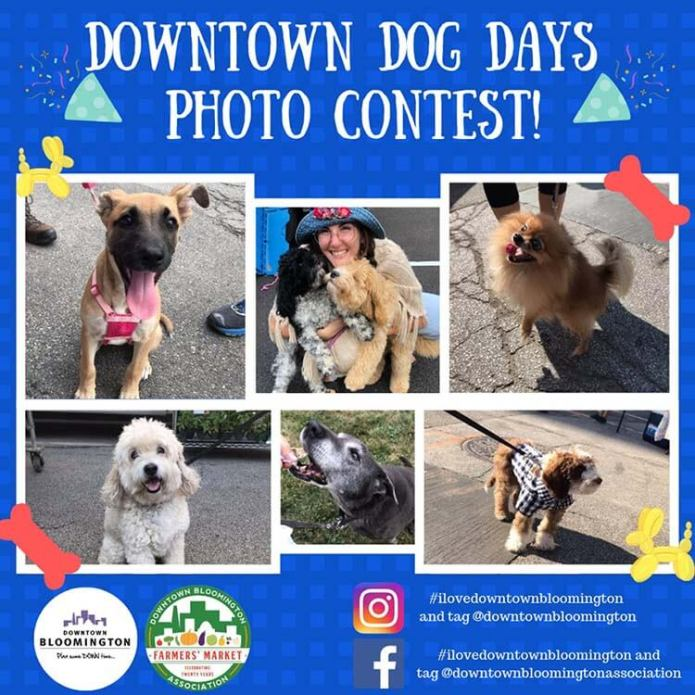 Downtown Dog Days Photo Contest