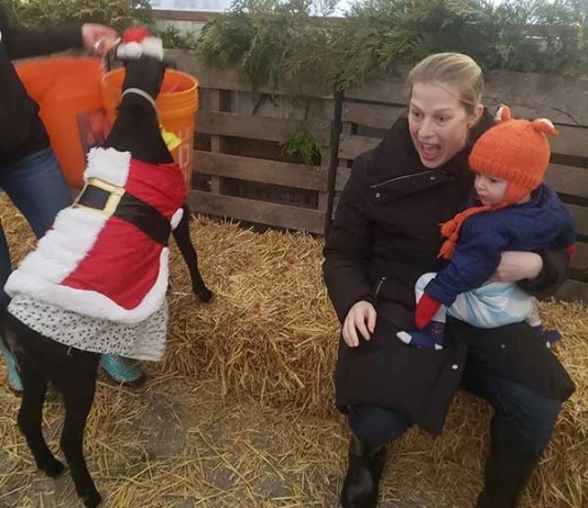 Yes, why there are Christmas Goats at this Champaign farm