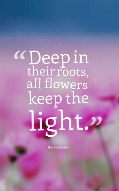 Deep in their roots, all flowers keep the light.
