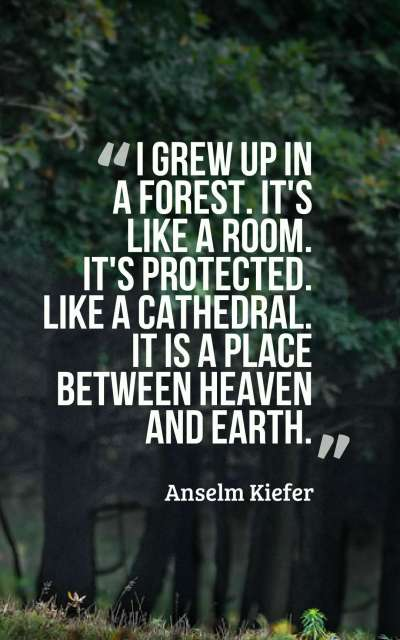 I grew up in a forest. It's like a room. It's protected. Like a cathedral... it is a place between heaven and earth.