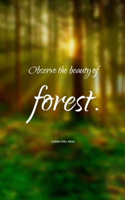 Observe the beauty of forest.