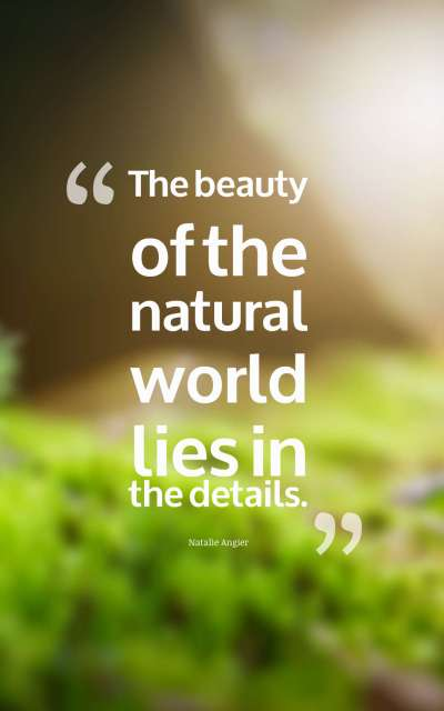 The beauty of the natural world lies in the details.