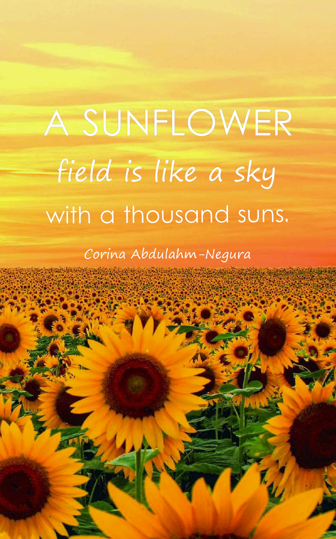 Sunflower Love Quotes : sunflower, quotes, Beautiful, Sunflower, Quotes, Images