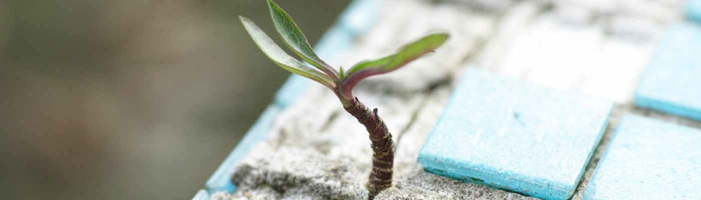 green leafed plant on sand