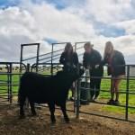 Led Steers Update
