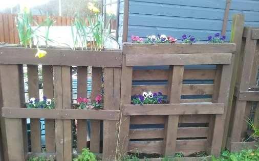 Audrey Dryburgh - Spring Sunshine (Garden) 1