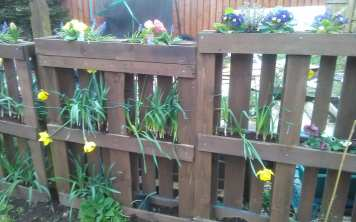 Audrey Dryburgh - Spring Sunshine (Garden) 3