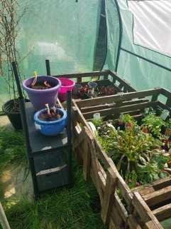 Danielle Dryburgh - Outdoor Plants 1