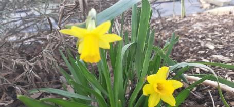 Emma Crawshaw - Spring Flowers 1