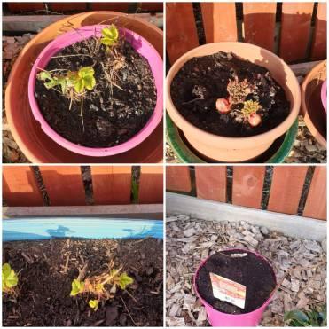 Jacqui Camille Glass - Garden Plants