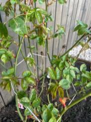 Kelly Hussain - Outdoor Plants 2