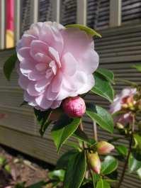 Monika J Gouws - Outdoor Flower