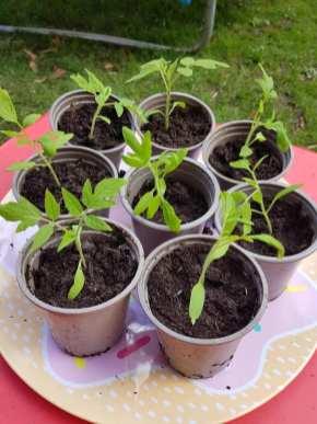 Monika J Gouws - Outdoor Plants 1