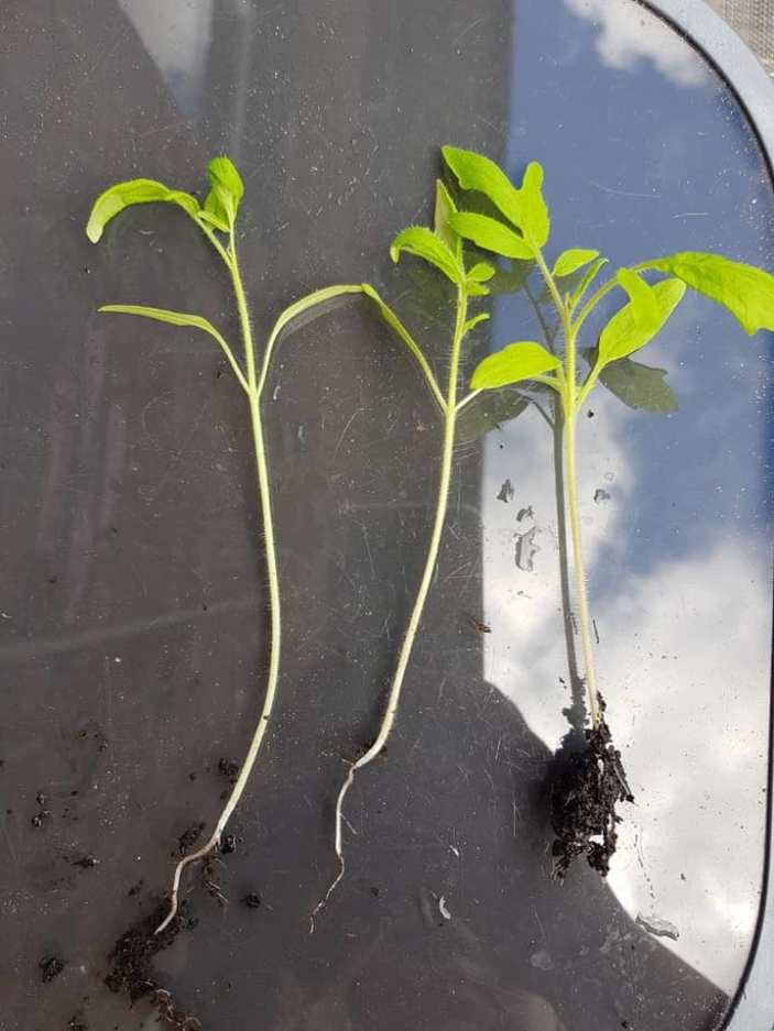 Monika J Gouws - Outdoor Plants 2