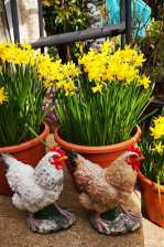 Ray Kelly - Daffodils & Chickens