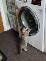 Judith Allison - Kitten Image 3