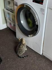 Judith Allison - Kitten Image 4