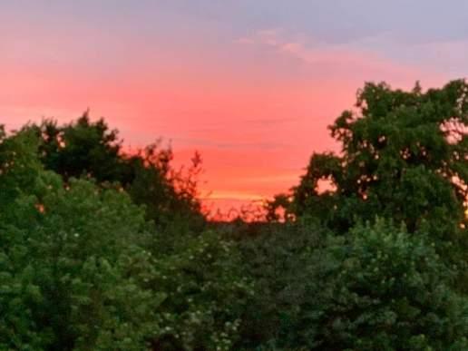 Rohini Sharma Joshi - Sunset from window