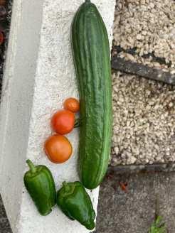 Coryn Barclay - Vegetables