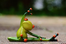 Grenouille qui fait du yoga