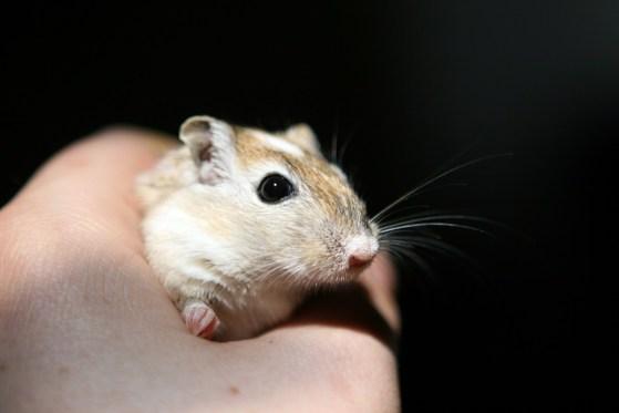 Mouse grip