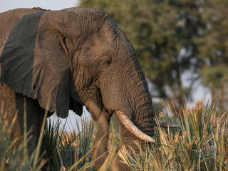 Mysterious Elephants Deaths in Botswana and Zimbabwe