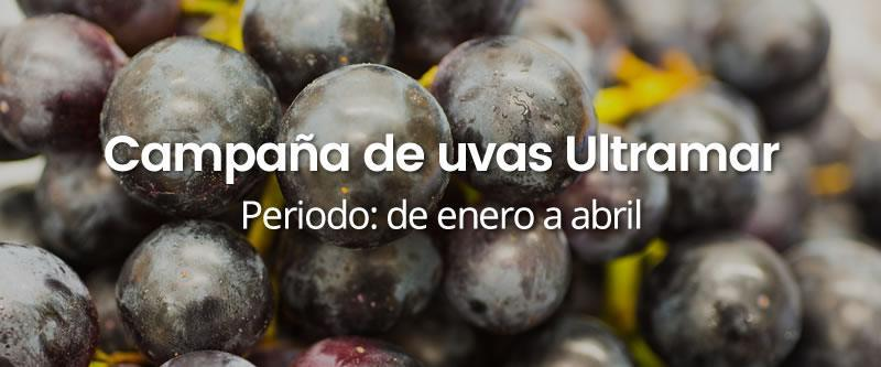campana-uvas-ultramar INICIO