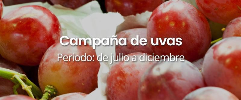 campana-uvas INICIO