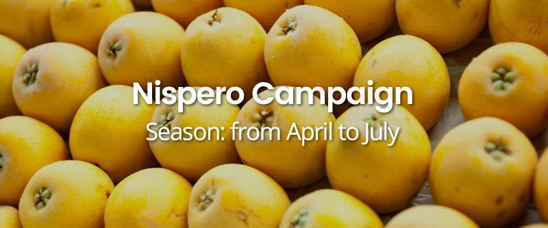 Nispero-Campaign HOME