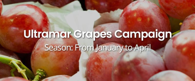 Ultramar-Grapes-Campaign HOME