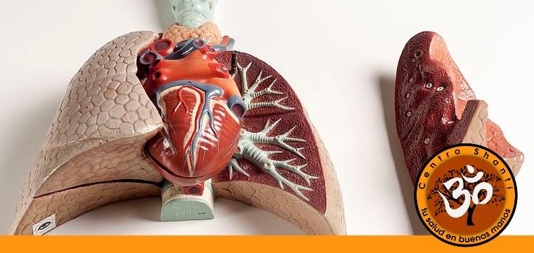 Modelo didáctico del sistema respiratorio (Wikimedia commons)