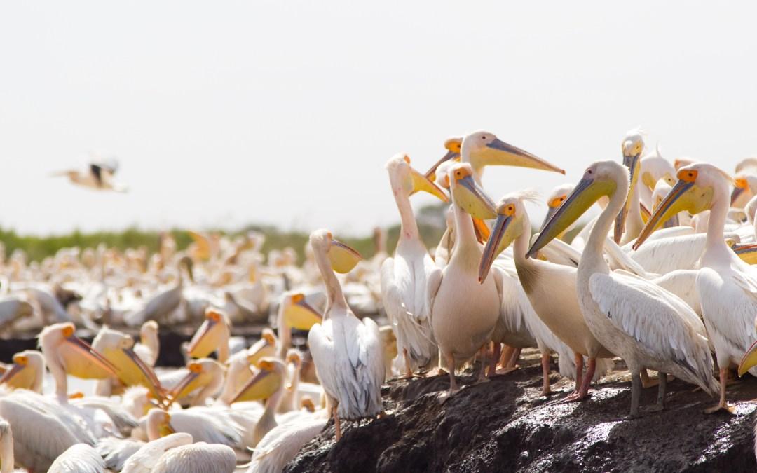 Pájaros, peluquería y parte de obra senegalés.