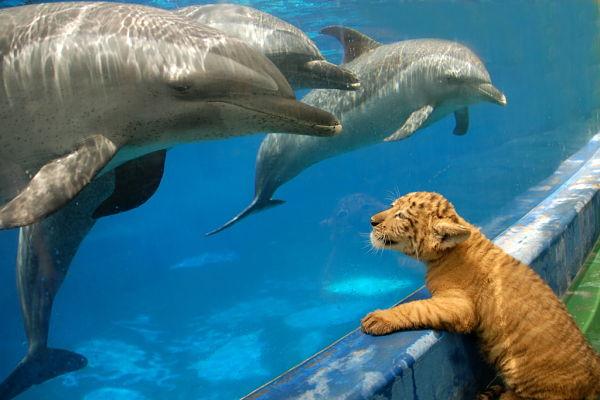 A biodiversidade do mundo animal