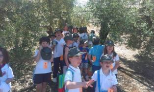paseos por olivares