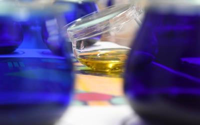 ¿Por qué es tan importante la cata de los aceites de oliva virgen?