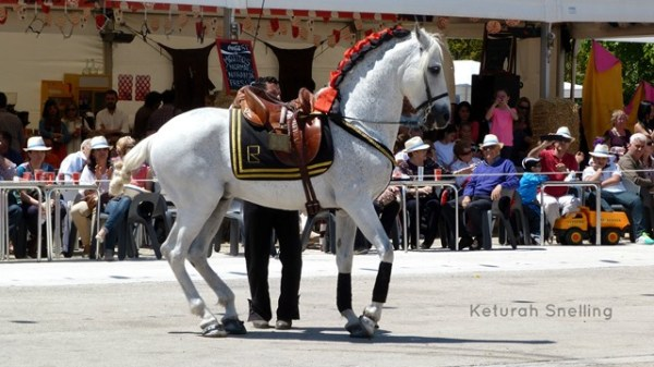 A CLASSIC ANDALUSIAN- MAGNIFICENT!