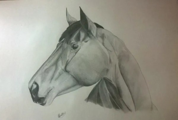 caballos-por-Keturah-Snelling